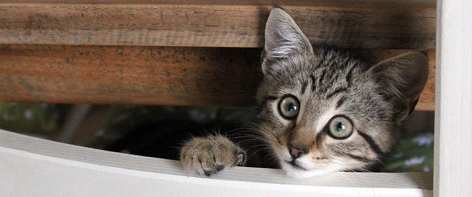 slider-kitten-final